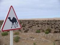 006 Western Sahara