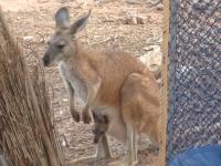 Australia 49