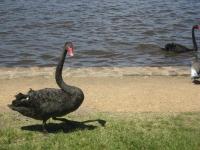 Australia 65