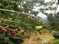 65-guatemala