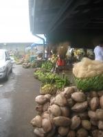 101 Samoa